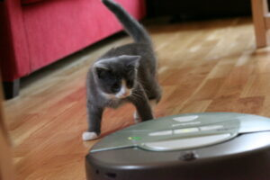 a cat staring defensively at a robot vacuum