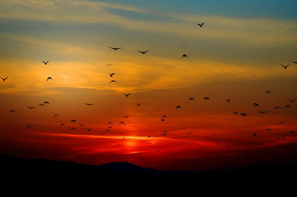 birds migrating over a sunset backdrop